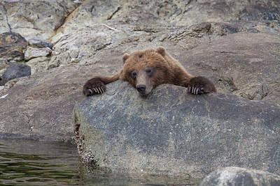 Prints Of Alaska Photograph - Waiting For The Salmon by Tim Grams