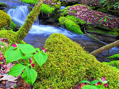 Photograph - Wakerobin Trillium By Stream by Alan Lenk