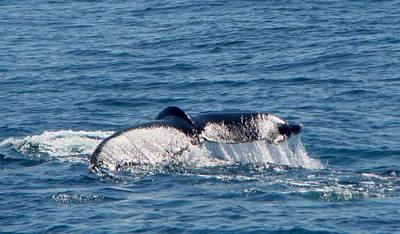 Wale Tale Original by Yvonne Breen