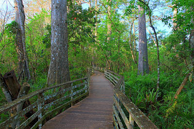 Photograph - Walk In Corkscrew Swamp by Sean Allen