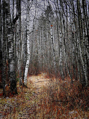 Art Print featuring the photograph Walk In The Forest by Blair Wainman