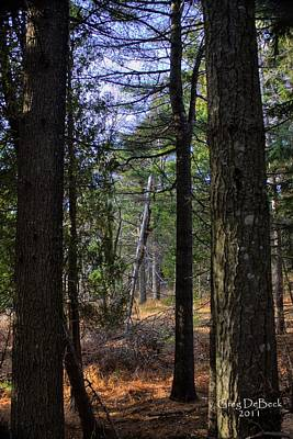 Photograph - Walk In The Forest by Greg DeBeck