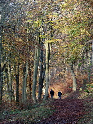 Photograph - Walk In The Woods by Nicola Butt