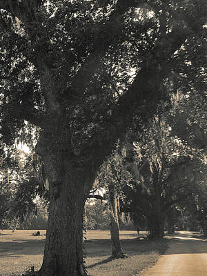 Art Print featuring the photograph Walk Through The Oaks by Brian Wright