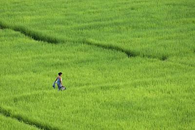 Walking In Green Rice Fields Near Mae Hong Son Art Print by Austin Bush
