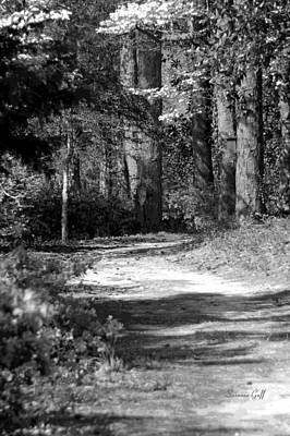 Pathway Digital Art - Walking In The Springtime Woods In Black And White by Suzanne Gaff