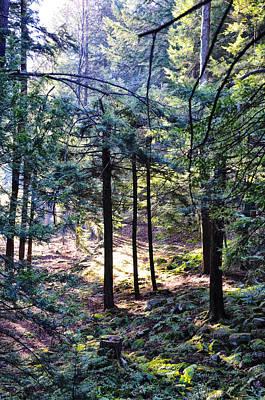Sun Rays Digital Art - Walking In The Woods by Bill Cannon
