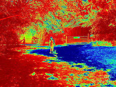 Photograph - Walking The Dog On A Hot Day by Renee Trenholm