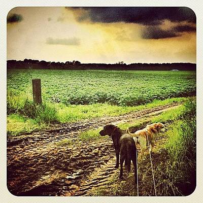 Dutch Photograph - Walking The #dogs by Wilbert Claessens