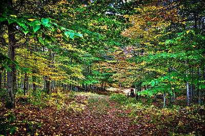 Photograph - Walking The Forest Trail by David Patterson