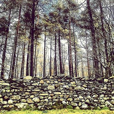 Forest Photograph - Wall And Forest In Cumbria by Nic Squirrell