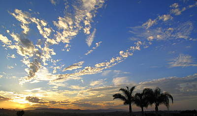 Laguna Beach Photograph - Want To Fly  by Linda Larson
