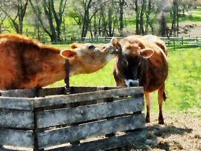 Cow Photograph - Want To Hear A Secret by Susan Savad