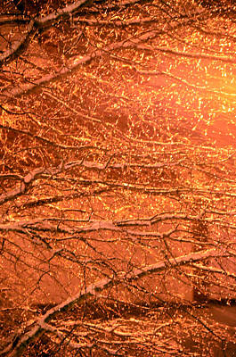 Warm Icy Reflections Art Print by Sandi OReilly