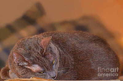 Photograph - Warm Kitty II by Debbie Portwood