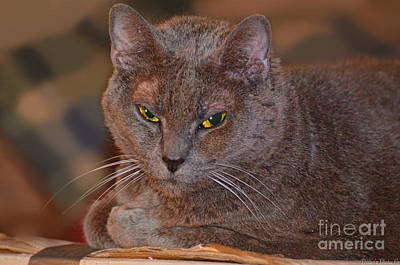 Photograph - Warm Kitty IIi by Debbie Portwood