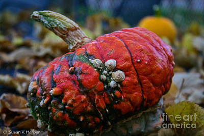 Photograph - Warts by Susan Herber