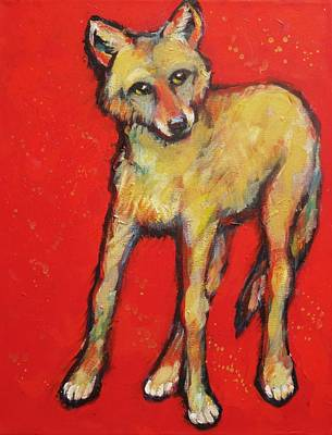 Wary Coyote Art Print by Carol Suzanne Niebuhr