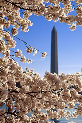 Photograph - Washington Monument Cherry Trees by Brian Jannsen