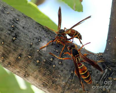 Wasp Fight Art Print by Billie-Jo Miller