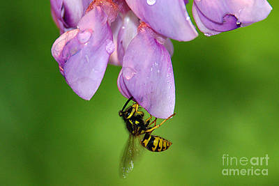 Wasp N Bloom Art Print by Jack Moskovita