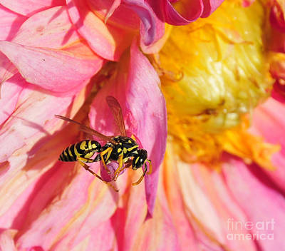 Photograph - Wasp On Flower by David Arment