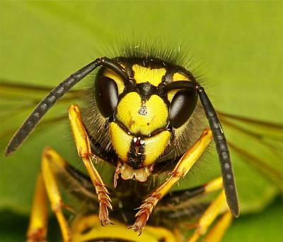 Wasp - Portrait Art Print by Ronald Monong