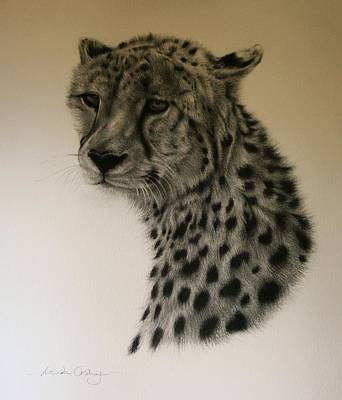 Cheetah Drawing - Watchful by Lucinda Coldrey