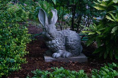 Watchful Rabbit Art Print by Douglas Barnett