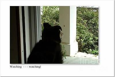 Photograph - Watching by Barbara Plattenburg
