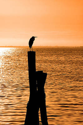 Photograph - Watching The Sunset by Carolyn Marshall
