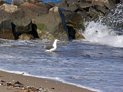 Photograph - Watching The Waves by Lynda Lehmann
