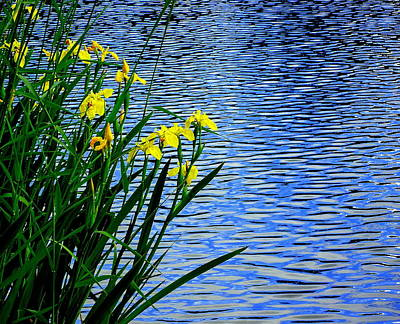 Photograph - Water And Yellow Flags by Peter Mooyman