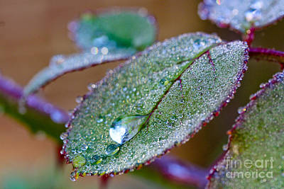 Photograph - Water Drop by Jo