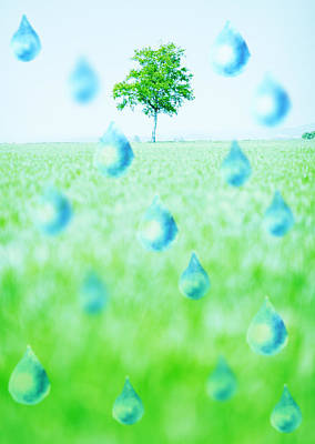 Y120831 Photograph - Water Droplets And A Tree by sozaijiten/Datacraft
