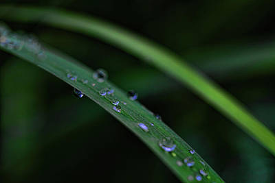 Photograph - Water Drops Iv by Rick Berk