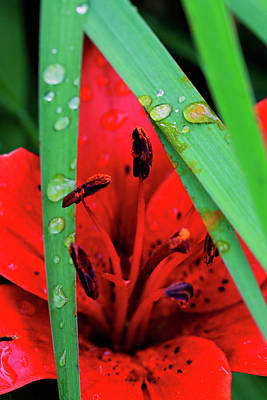 Photograph - Water Drops Ix by Rick Berk