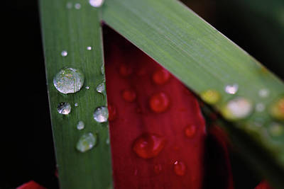 Photograph - Water Drops V by Rick Berk
