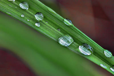 Photograph - Water Drops Viii by Rick Berk