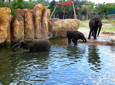Photograph - Water For Elephants by Judy Wanamaker