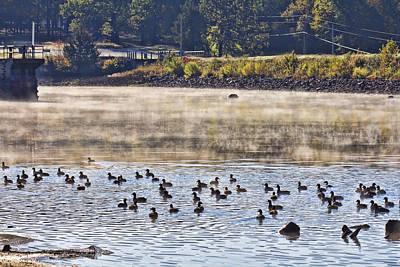 Water Fowl At Lake Wilhelmina Arkansas Art Print by Douglas Barnard