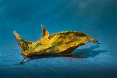 Photograph - Water Glossed Leaf by Gene Hilton