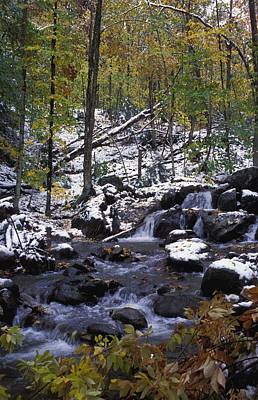 Water In Forest Art Print by David Chapman