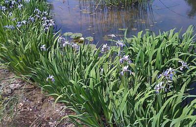 Photograph - Water Iris Serenity by Barbara Plattenburg