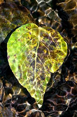 Art Print featuring the photograph Water Leaf by Scott Holmes