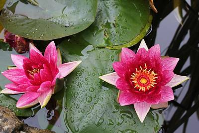 Photograph - Water Lilies by David Grant