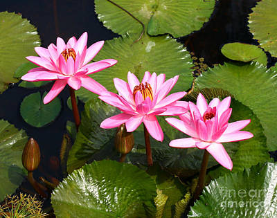 Art Print featuring the photograph Water Lilies. by Denise Pohl