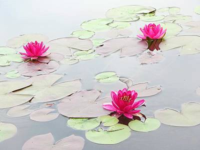 Water Lilies In The Morning Art Print by Michael Taggart