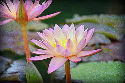 Purchase Online Photograph - Water Lilies by Steven Michael