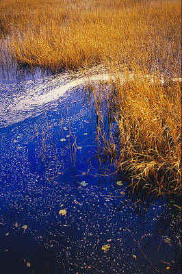 Lake Waccamaw Photograph - Water Lilies, Wind-whipped Foam by Raymond Gehman